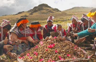 Do the Andes hold the Answers to Global Food Insecurity? The International Potato Center Aims to Find out.