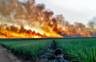 Wildfires in the Brazilian Pantanal leave a Lasting Impact on Wildlife, Local Communities