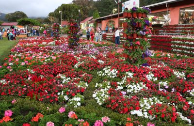 A Look at the Artisan, Gastronomic Center of Boquete, Panama