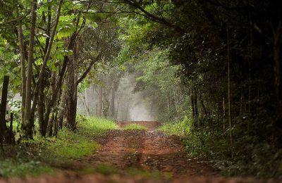 Massive Nature Reserve in Paraguay Celebrates 30th Anniversary