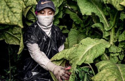 Tobacco and its Ties to Latin American Child Labor in the U.S