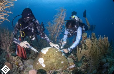 """""""It's Like Trying to Put Out a Fire With a Glass of Water:"""" An Underwater Pandemic Poses An Existential Threat to the Mesoamerican Barrier Reef"""