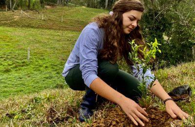 The Battle Against Deforestation in Brazil's Atlantic Forest