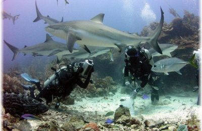 Sharing the Sea with Sharks